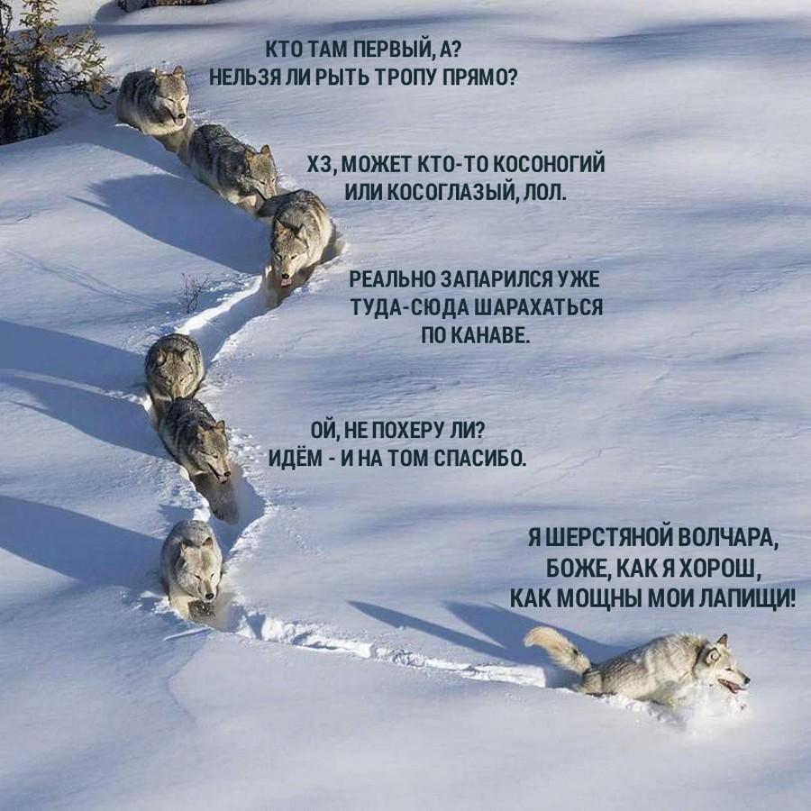 Подборка интересных и веселых картинок 02.02.17