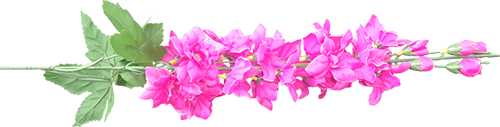 Клипарты png Цветы