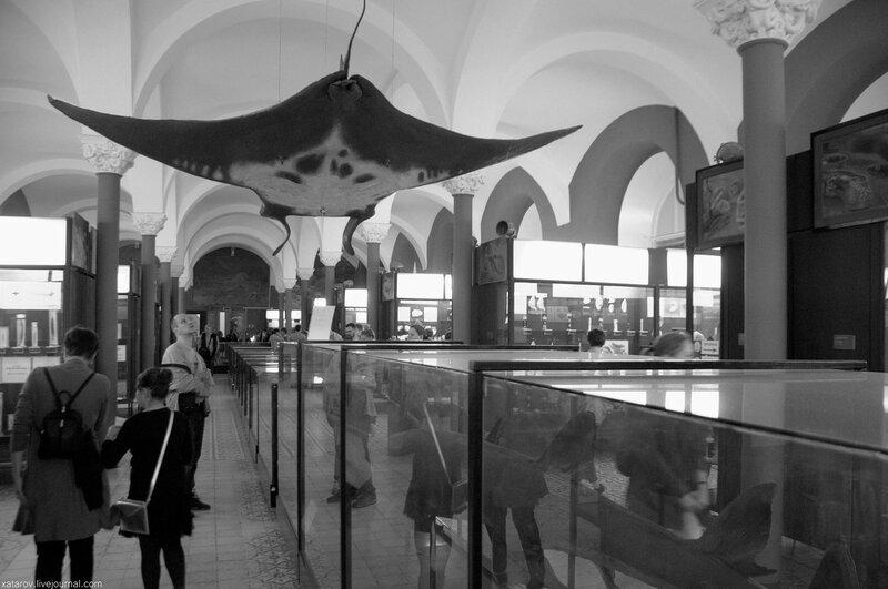 Ночь музеев. Зоологический музей. 20 мая 2017 года