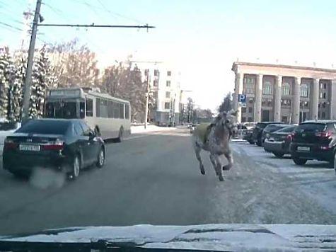 Вцентре Челябинска под окнами мэрии взбесилась лошадь