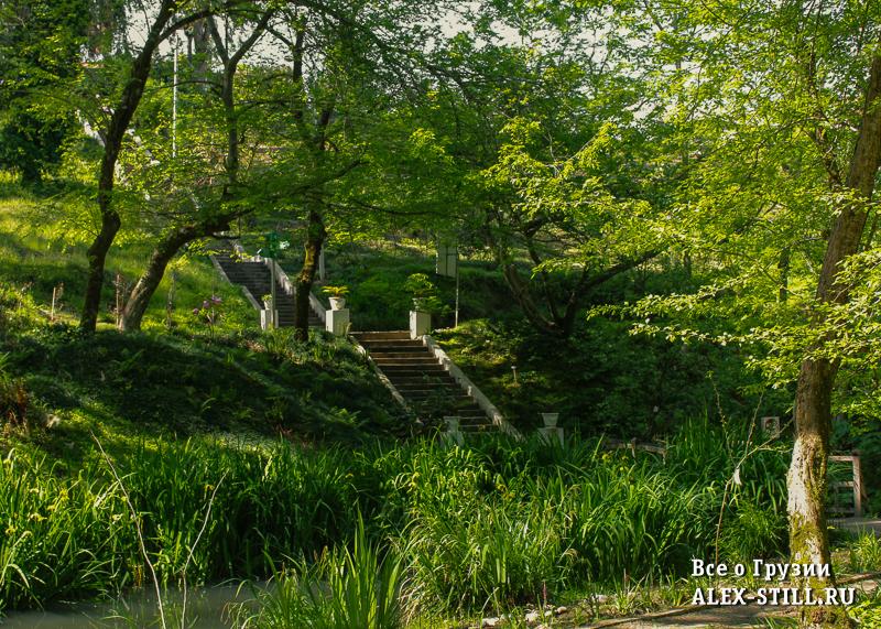 Отелей у ботанического сада несколько