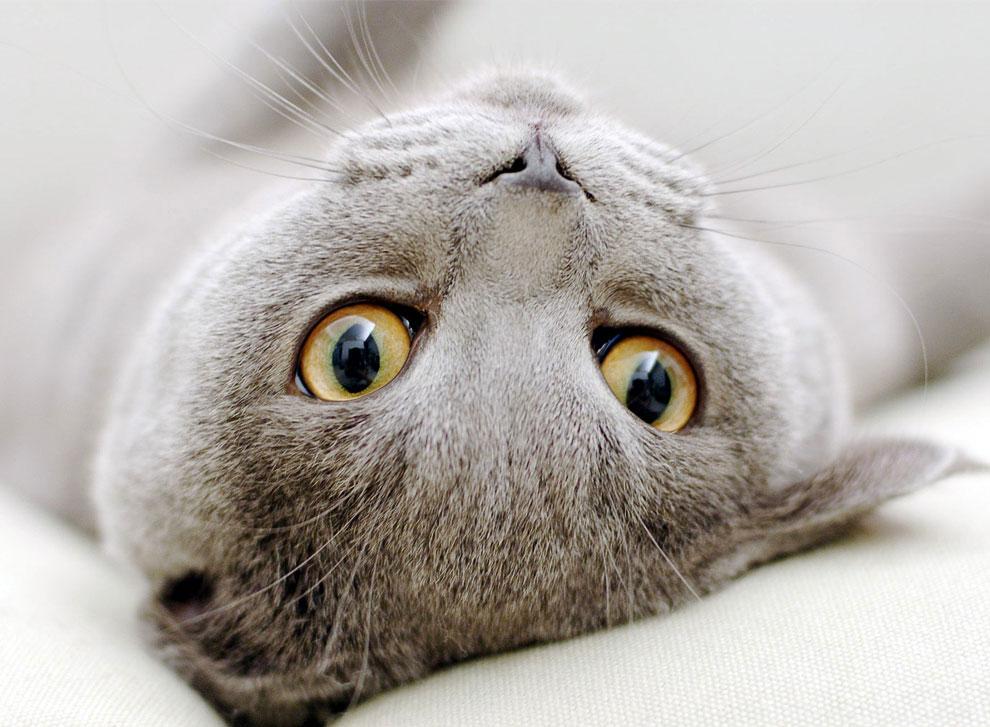 Я изучил мудрость многих философов и многих кошек. Мудрость кошек неизмеримо выше. Ипполит Тэн
