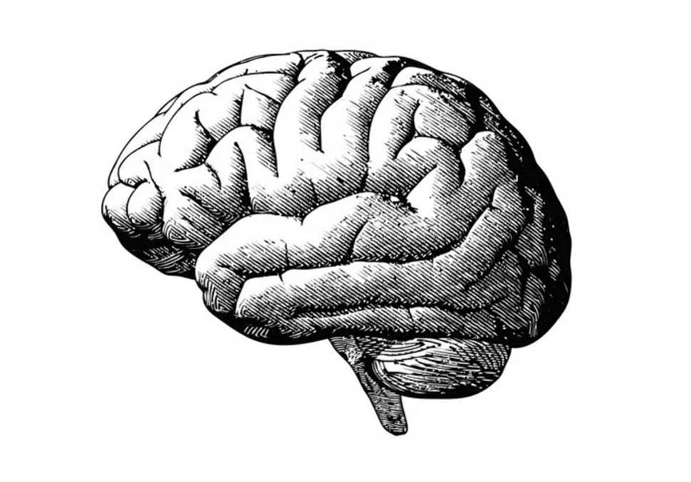 Если задуматься, получается, что мозг сам себя так назвал Мозг — самозванец.