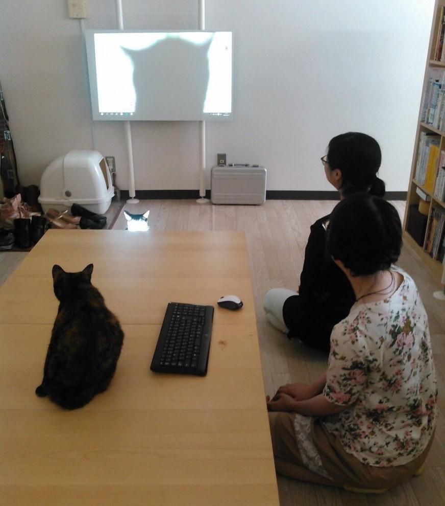 Японская IT-компания приютила в своём офисе целое полчище бездомных кошек