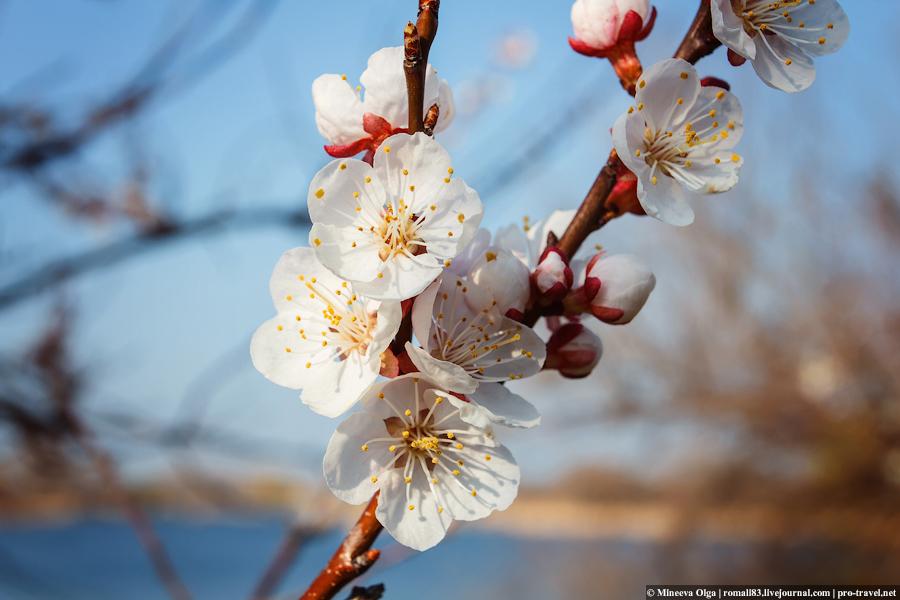 Весна в Анапе