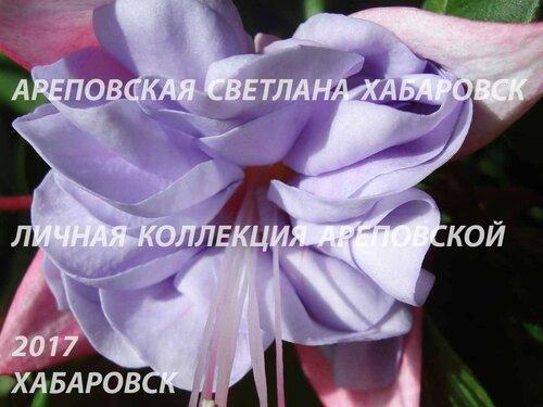 НОВИНКИ ФУКСИЙ. - Страница 5 0_19bbe3_3ceaf583_L