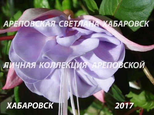 НОВИНКИ ФУКСИЙ. - Страница 5 0_19bbe4_9299ad45_L