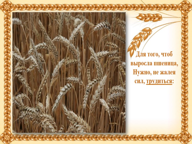 Открытки. Всемирный день хлеба! Для того, чтоб выросла пшеница, нужно не жалея сил трудиться!