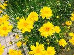 Цветы Абхазии