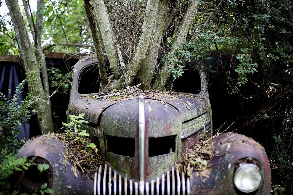 8. Кстати, половина лесной зоны Земли. принадлежит тропическим лесам. (Фото ):