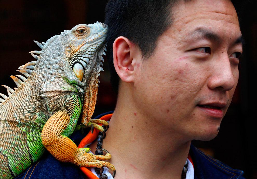 8. Хозяин взял с собой на горнолыжный курорт в провинции Хэнань своего домашнего друга — утку.