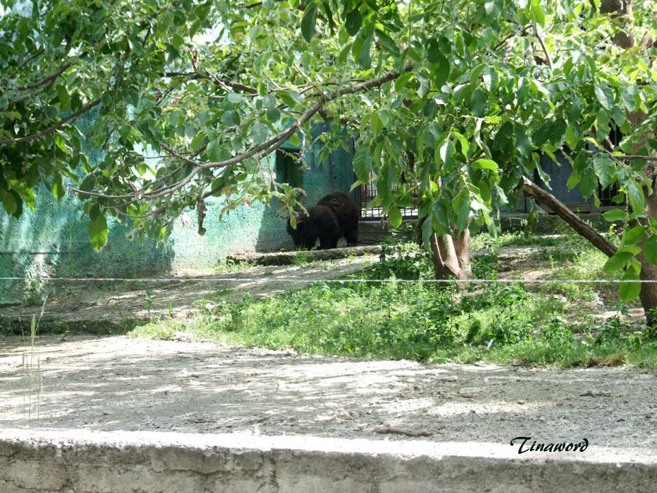 зоопарк-16.jpg