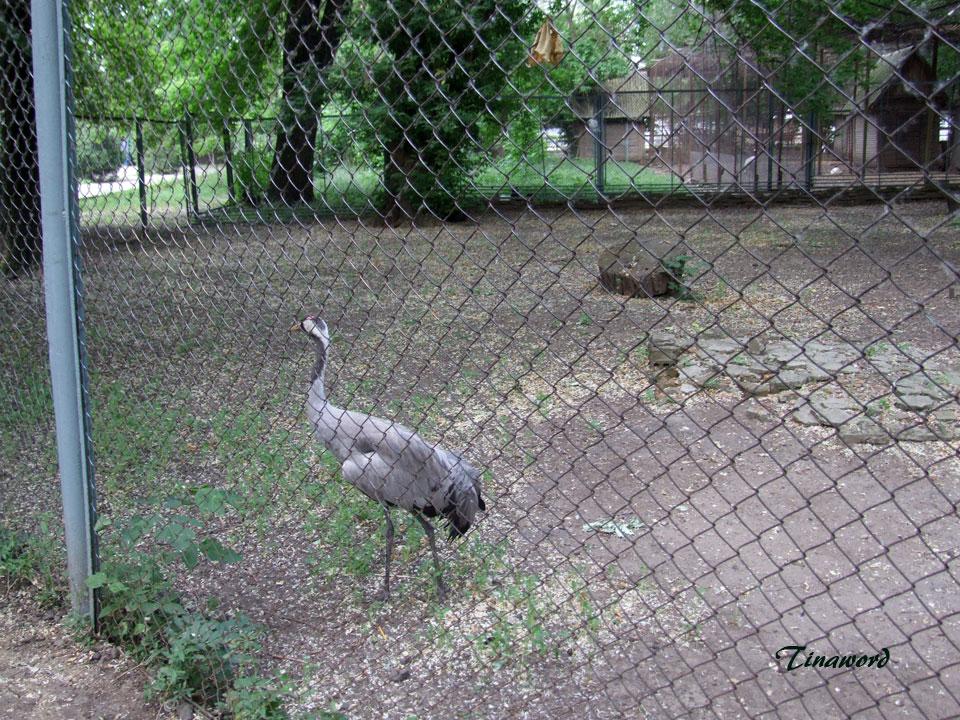 зоопарк-43.jpg