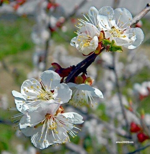 Апрельская сага цветения