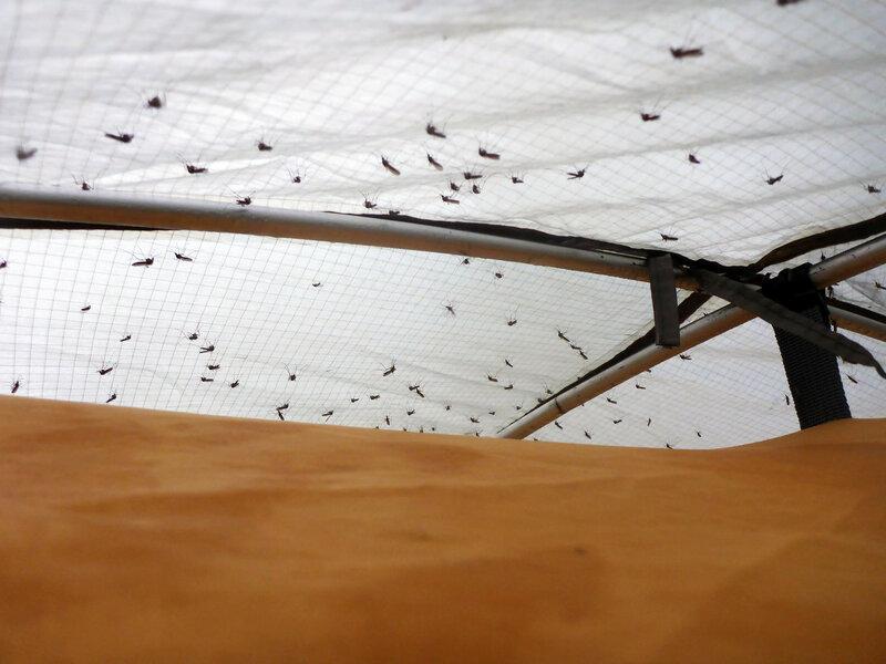 много комаров сидит на тенте палатки cetus 3 в августе в заполярье