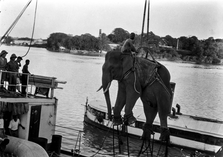 1116. Погрузка слонов