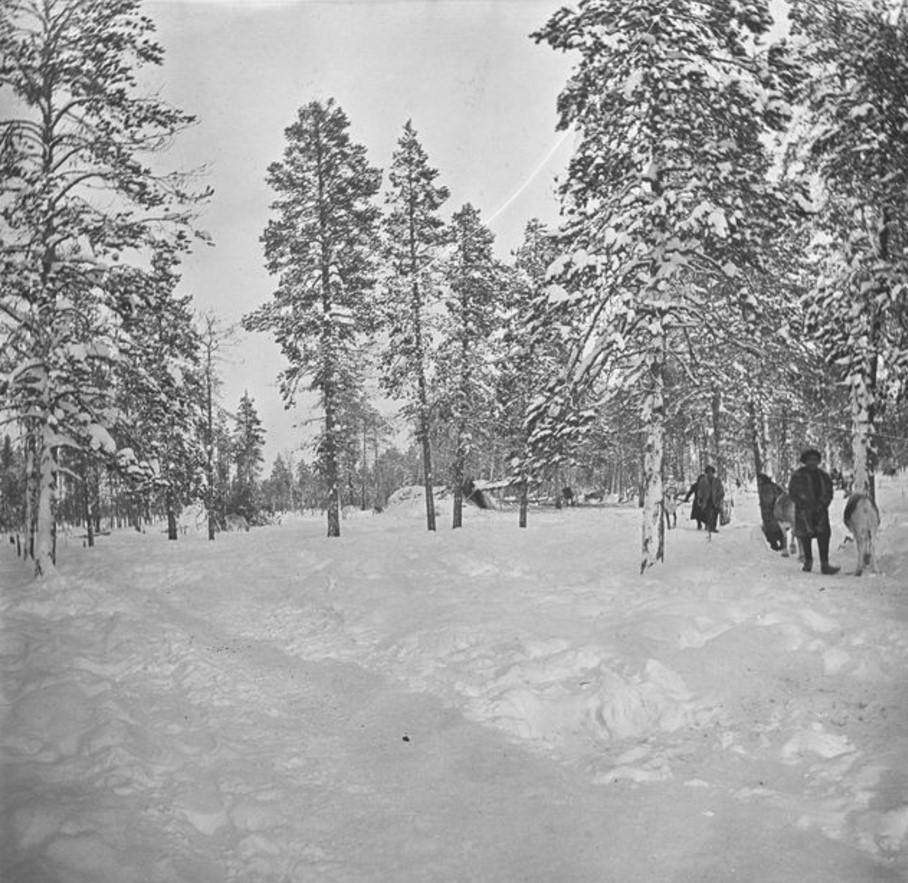 18. Люди и олени в снежном лесу