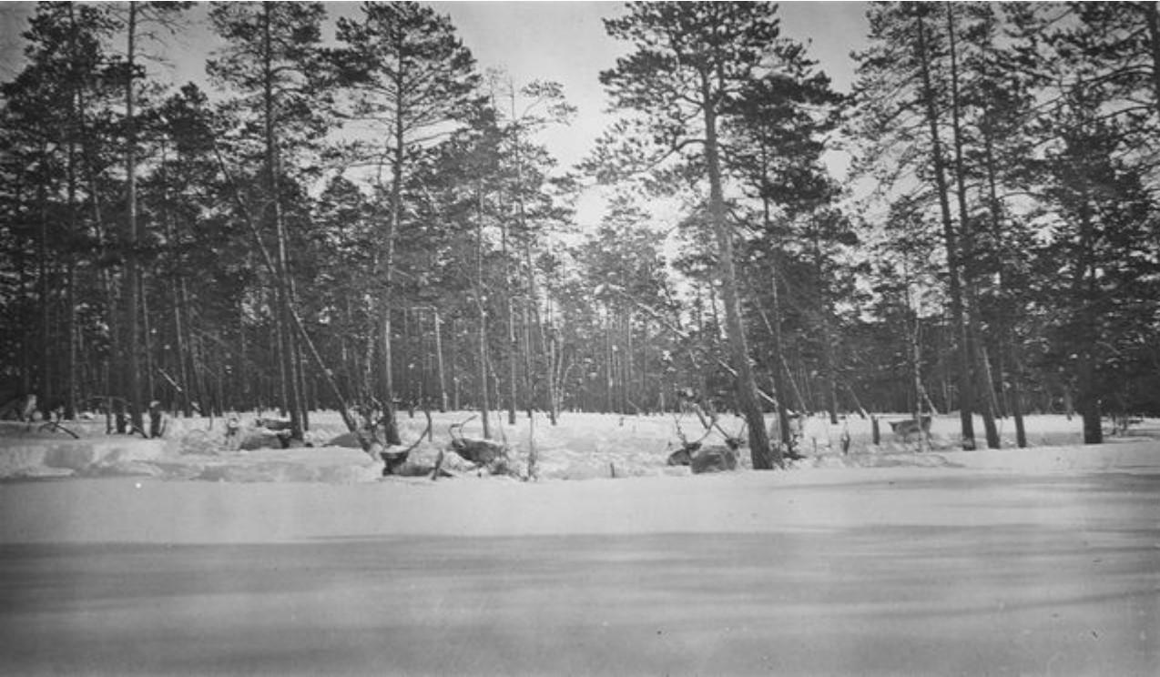 33. Олени в лесу