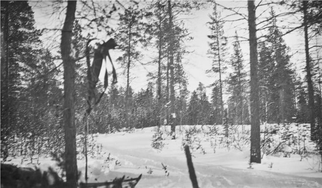136. Дорога через лес