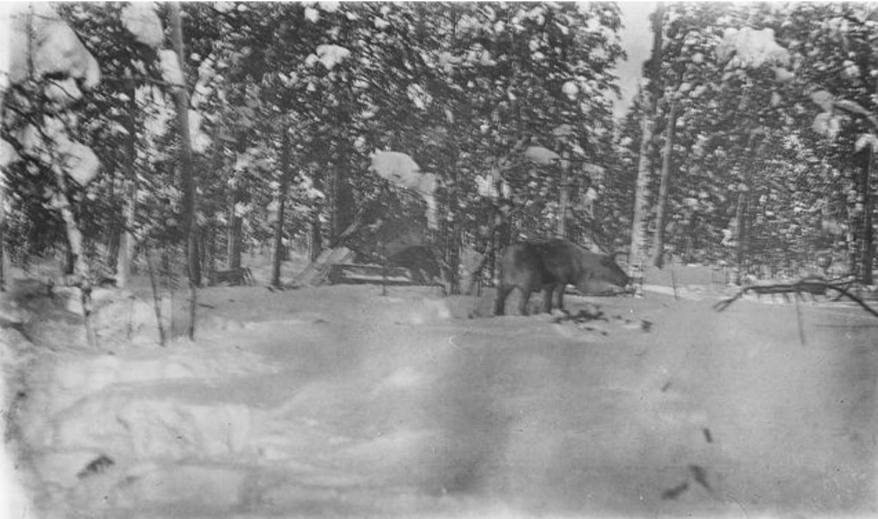 154. Олень в зимнем лесу