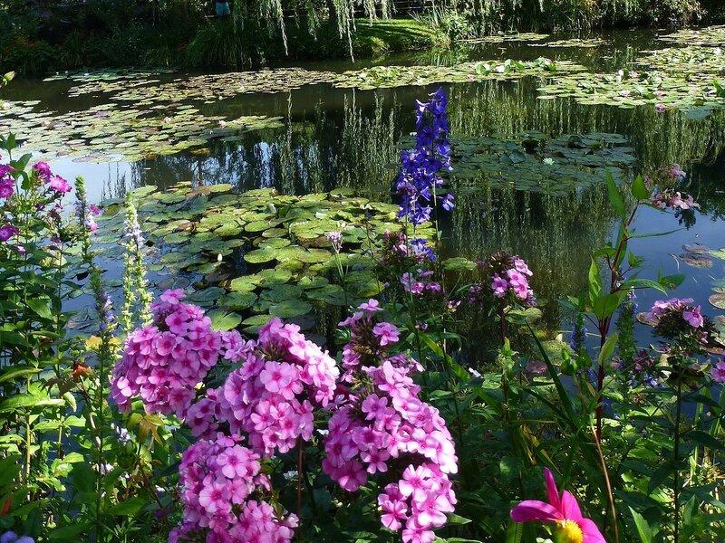 Цветы у пруда