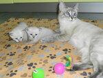Котята Малгожаты ТП_(04.07.17)