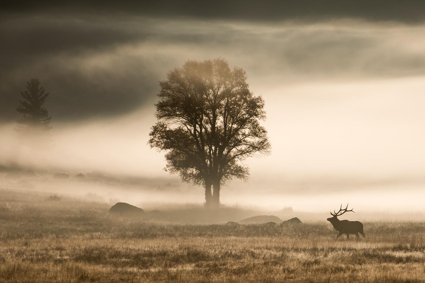 Elk / фото Rick Austin