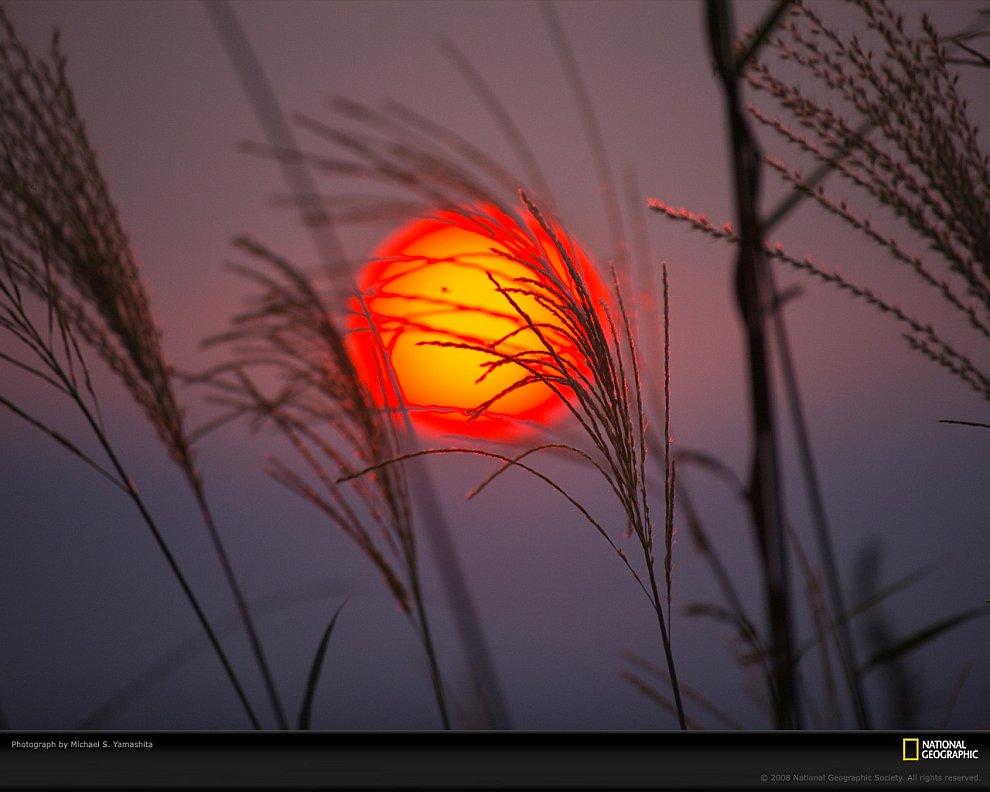Пламя Пламя — истинно оранжево -красный цвет. (Фото Kees Straver):