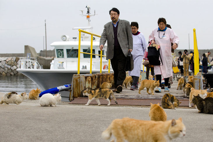 2. Остров Аошима расположен в префектуре Эхимэ. По состоянию на 1945 год здесь жили 900 человек, одн