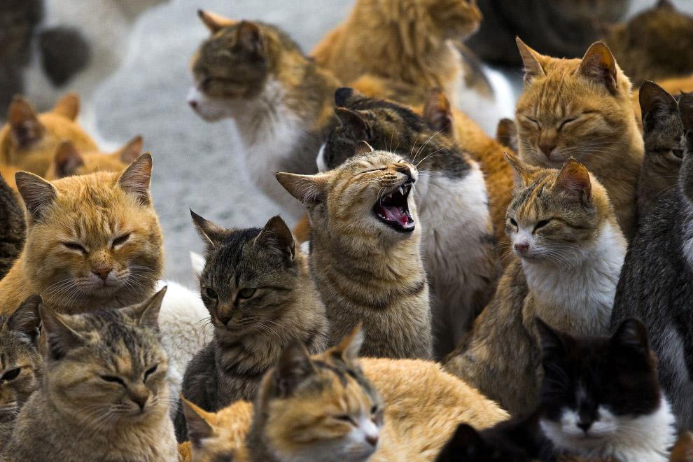 5. Коты на пристани в ожидании прибывающих туристов. (Фото Thomas Peter | Reuters):
