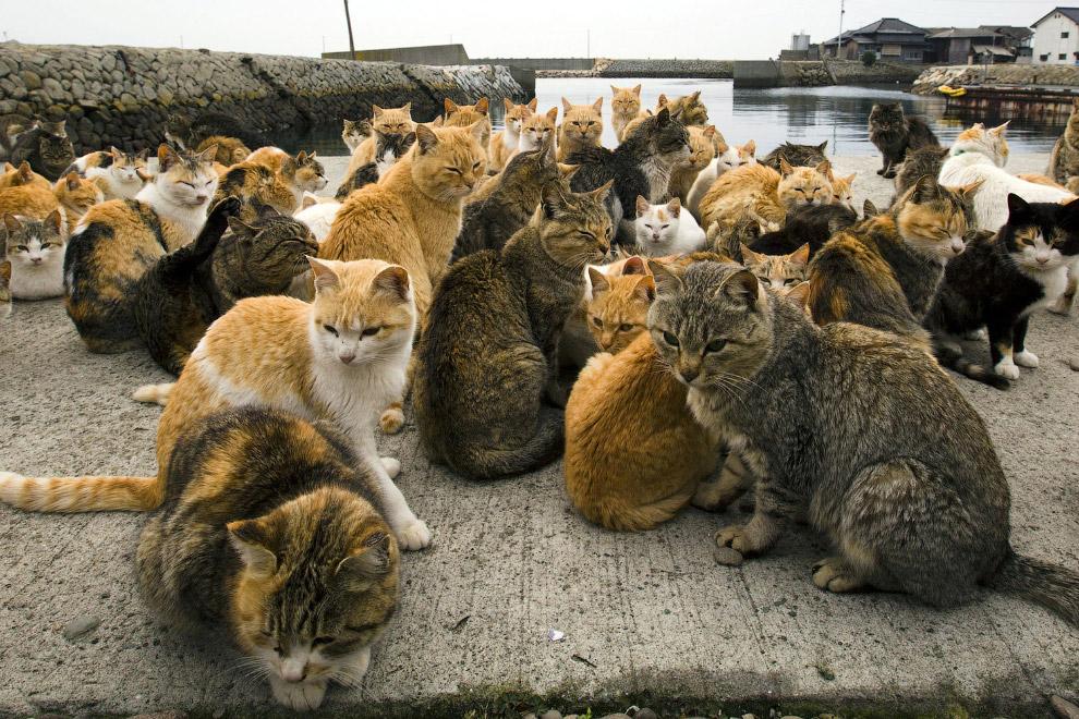 10. След от кошачьей лапы, остров Аошима, 25 февраля 2015. (Фото Thomas Peter | Reuters):