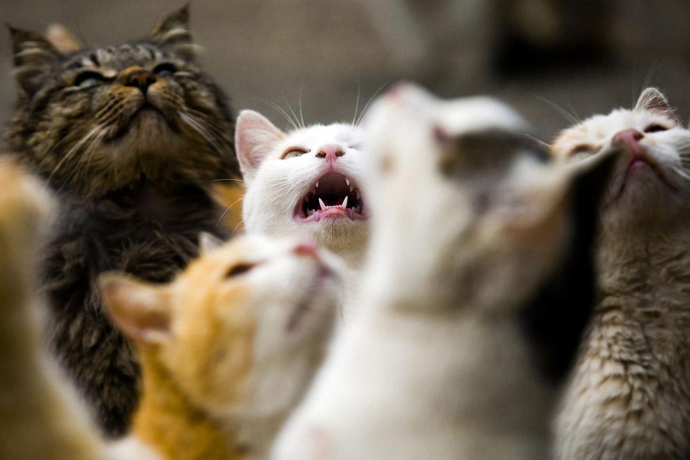 13. Хвост трубой. Кошачий знак приветствия и дружелюбия. (Фото Thomas Peter | Reuters):