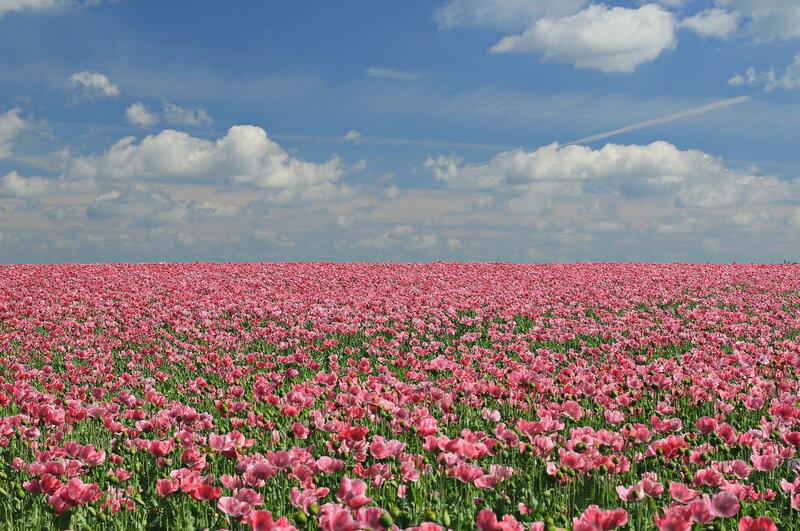 Розовая даль!..2H1A1334OB.JPG