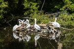 Остров пеликанов