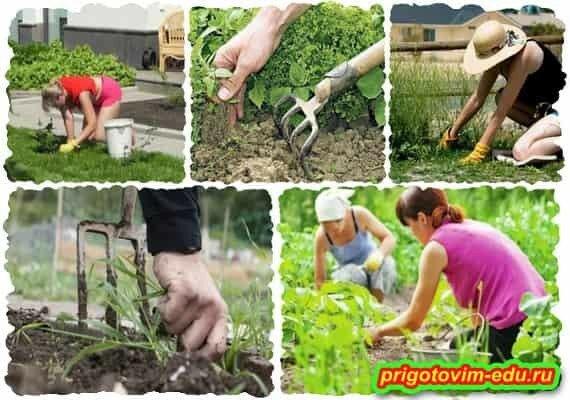 Избавляемся от сорняков и вечных прополок