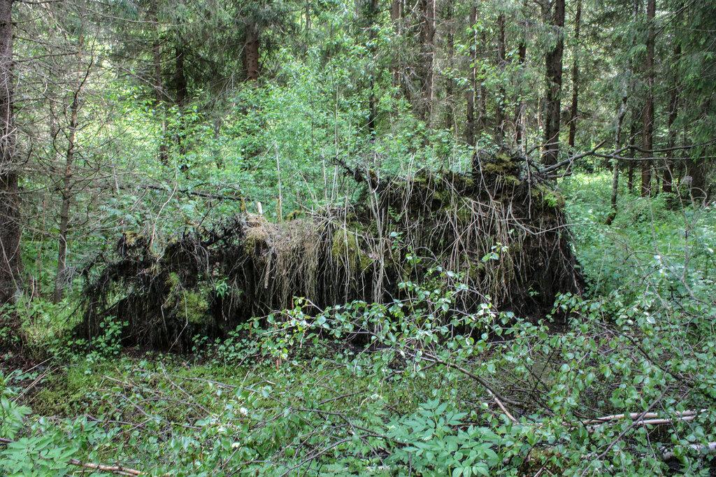 Лес-73.jpg