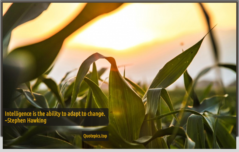 Intelligence is the ability to adapt to change. ~Stephen Hawking