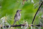 Гордый профиль птички-малышки