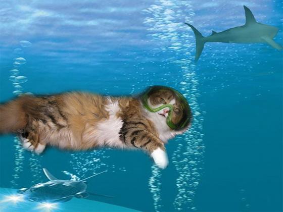 С днём водолаза! Кот - водолаз открытки фото рисунки картинки поздравления