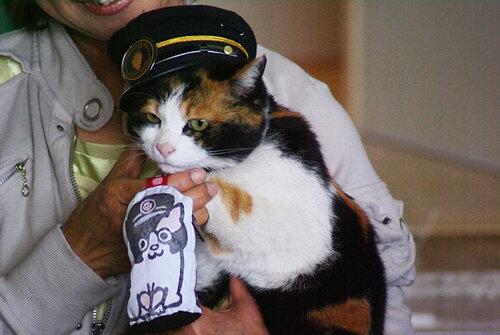 Кошка Тама