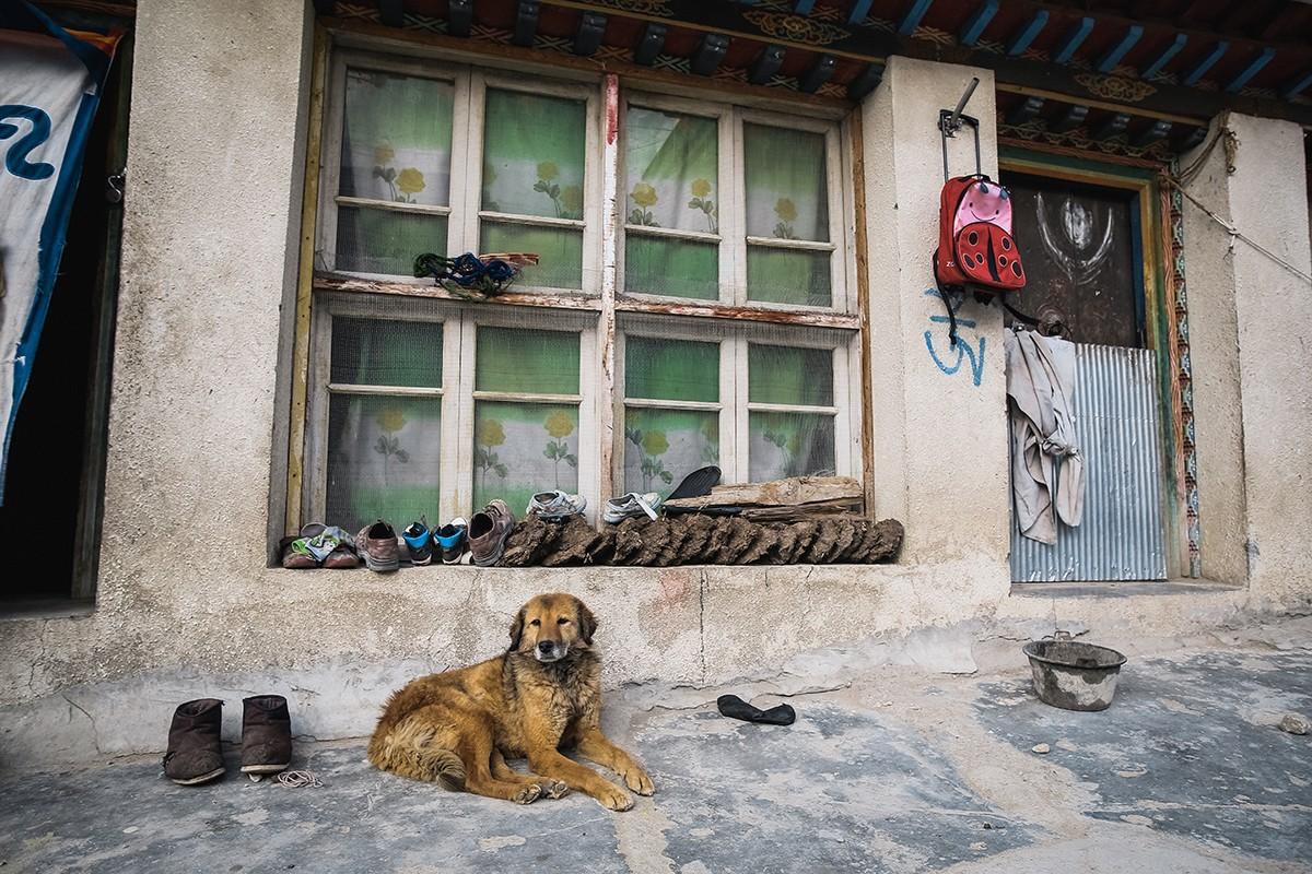 24. В Тибете очень много собак, и почти около каждого магазина или дома можно увидеть своего пса.