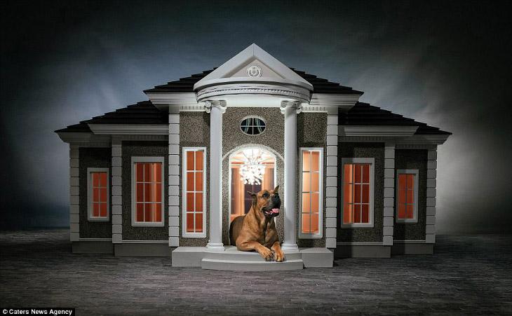 Собачья конура за 150 000 фунтов стерлингов (11 фото)