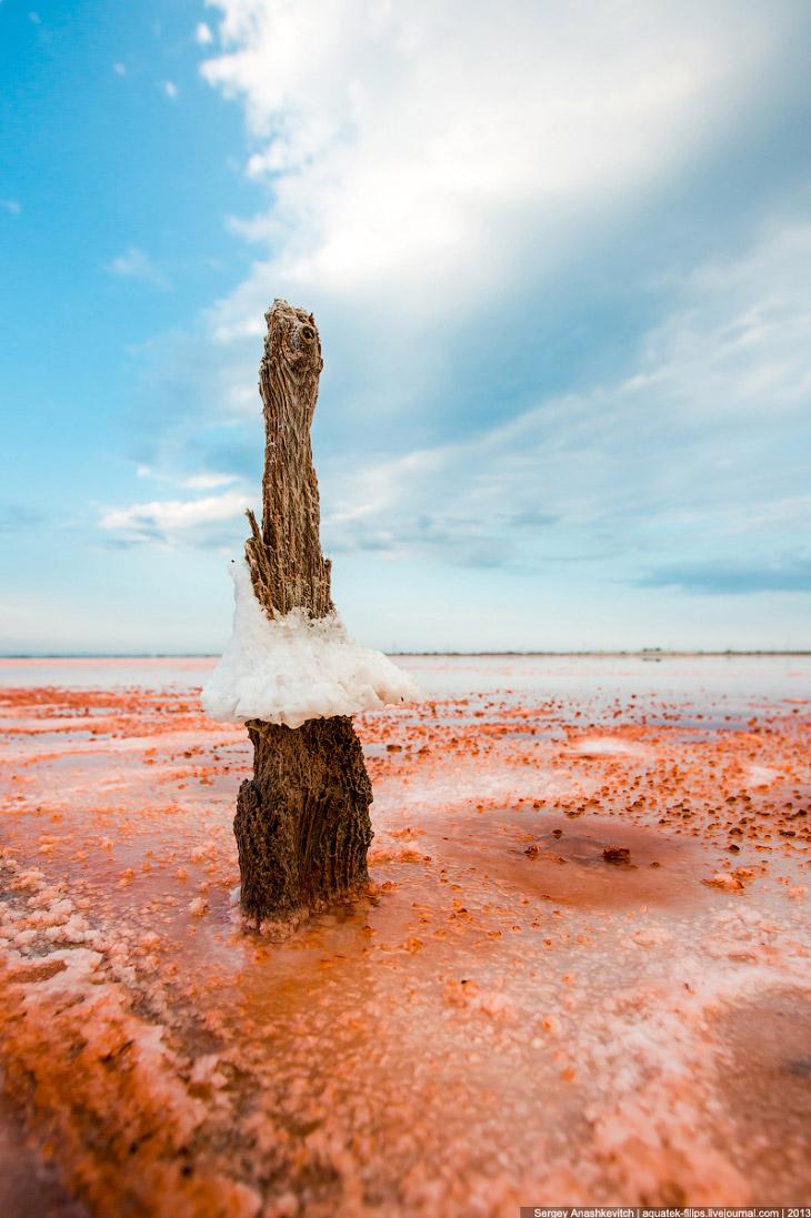Где-то эти «цветы» торчат прямо из ярко-красной воды, где-то соль выросла выше ее уровня.