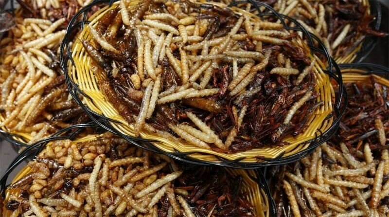 китай, конкурс, поедание насекомых