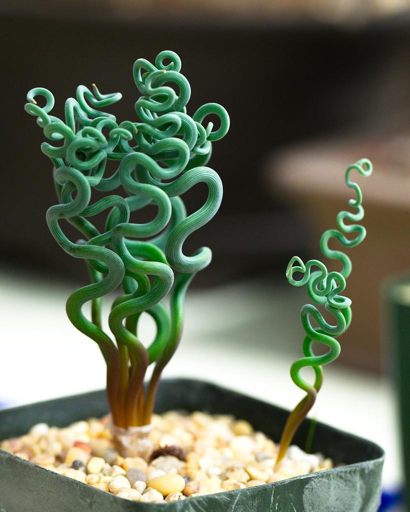 Прикольных растений пост