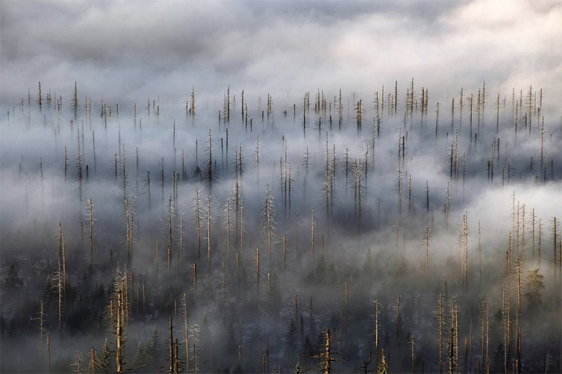 Cloud Forest: Landscape Photos of the Misty Czech Bohemian Forest by Kilian Schonberger