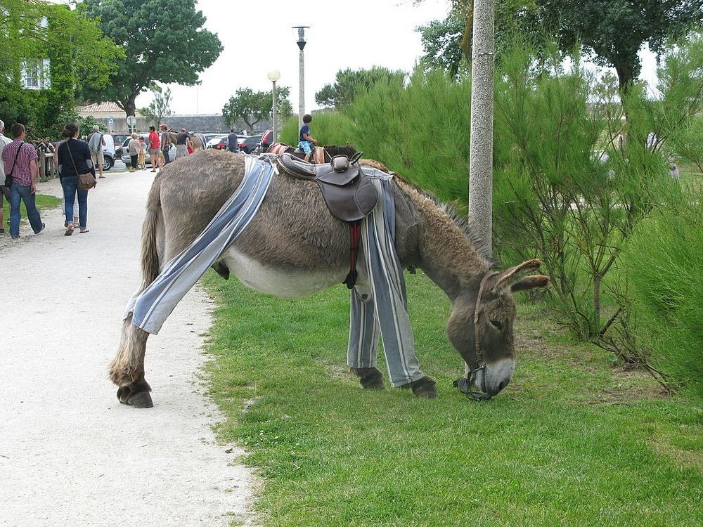poitou-donkeys-22.jpg