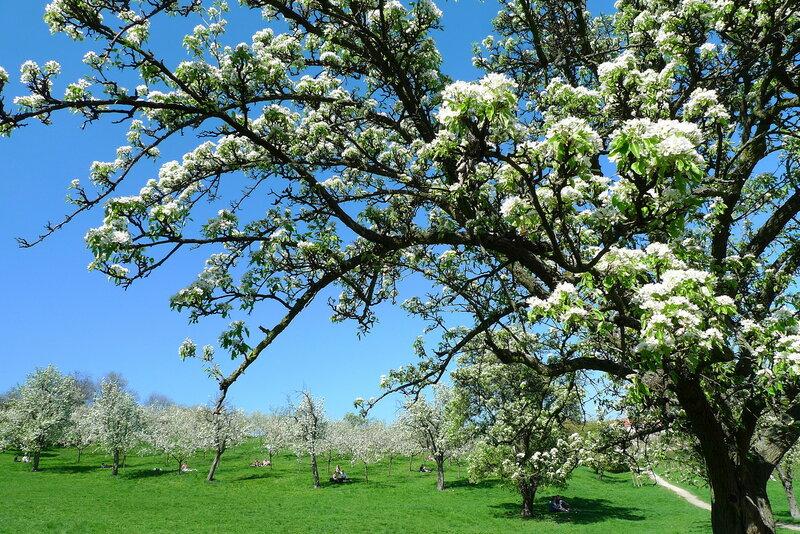 А в садах весна бушует
