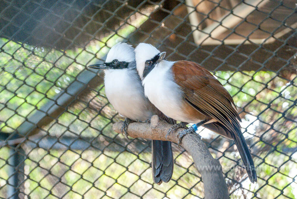 Парк птиц в Чайнате