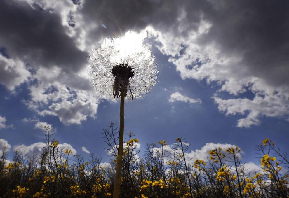 26. Радуга и ветряки. Также смотрите рассказ о гигантах с винтами — « Ветряки: сила ветра ». (Ф